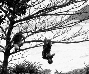 beach, tree, and le parkour image