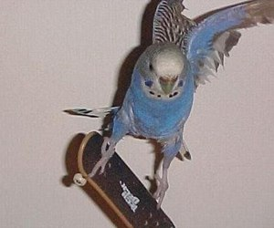 blue, skate, and parrot image