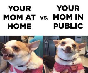 funny, mom, and dog image