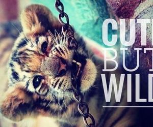 animal, cat, and cub image