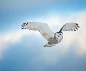 owl, photography, and sky image