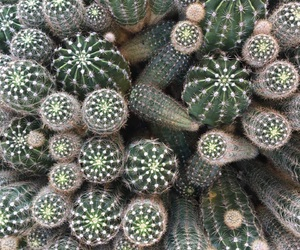 green, cactus, and photography image