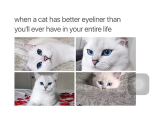 cat and eyeliner image