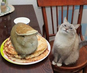 cat, pancakes, and funny image