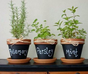 plants and mint image