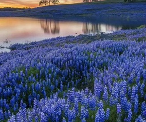nature, flowers, and blue image