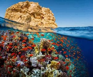 beautiful, sea, and fish image
