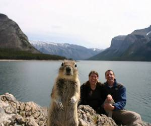 squirrel, funny, and animal image