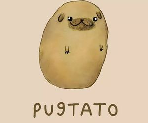 potato, pug, and pugtato image