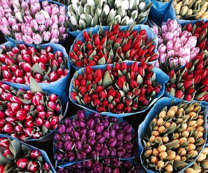 flowers, white, and tulipans image