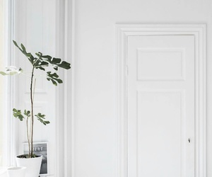 plants, interior, and white image