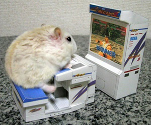 hamster, cute, and funny image