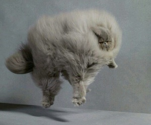cat, fluffy, and funny image