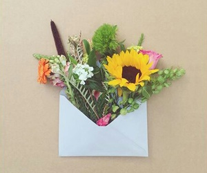 carta, color, and flowers image