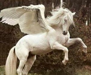 pegasus, horse, and white image