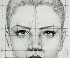 face and proportions image