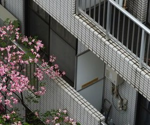 building, japan, and flowers image