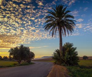 Algeria, canon, and farm image