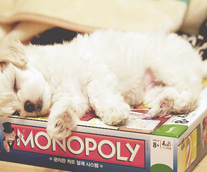 dog, cute, and monopoly image
