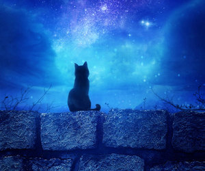 cat, night, and sky image