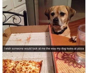 dog, pizza, and funny image