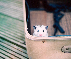 cute, hamster, and mouse image