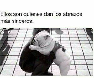dogs, frases, and love image