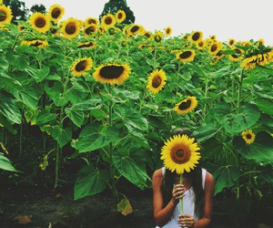 flower, photograpy, and sunflower image
