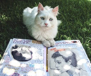 cat, art, and book image