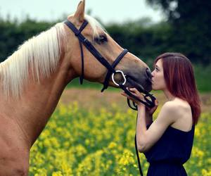 horses, equeistrian, and love image