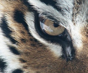animals, wallpaper, and beautiful image