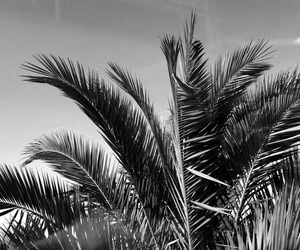 black and white and summer image