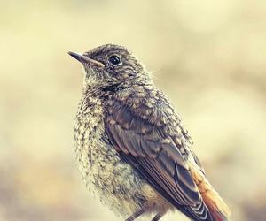 beautiful, bird, and life image