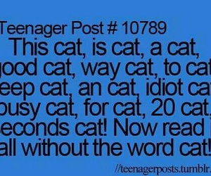 funny, idiot, and cat image