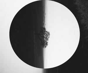 tree, black and white, and indie image