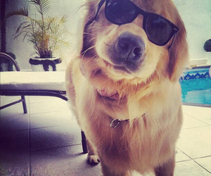 dog, sunglasses, and animal image