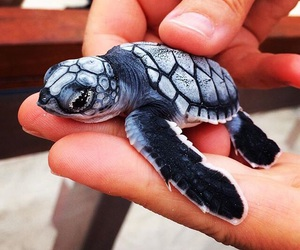 adorable, beach, and turtle image