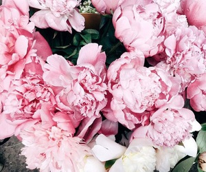 flowers, luxury, and spring image