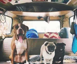 dog, car, and pug image
