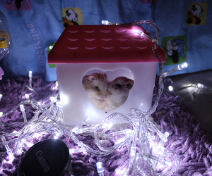 hamster, light, and photography image
