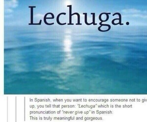 tumblr, funny, and lettuce image