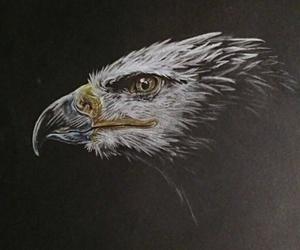 animal, draw, and eagle image