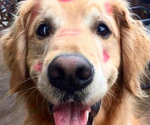 kiss, puppy, and cute image