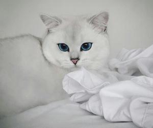 animal, beautiful, and blue image