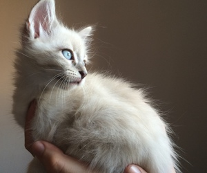 adorable, pretty, and blue eyes image