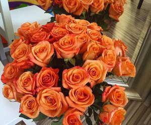 flowers, roses, and orange image