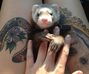tattoo, cute, and animal image
