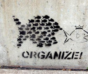 fish, organize, and funny images image