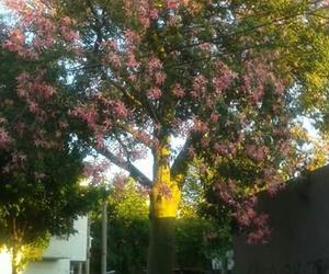 love tree arbol image