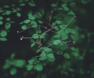 green, net, and leaves image